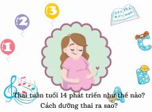 Thai 14 tuần tuổi phát triển ra sao? Cách dưỡng thai như thế nào? 4